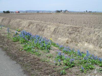 道端の花の写真