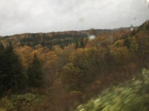 恵比島から峠下間の紅葉の写真